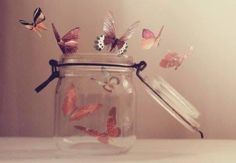 bote mariposas